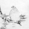 麒麟がくる【土岐の鷹】土岐頼芸が描いた鷹の絵は実在するか?土岐一族の鷹の絵を紹介!